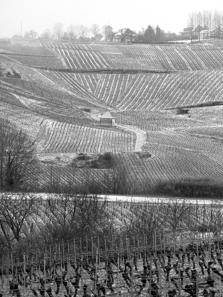 Vineyards near Chateau-Chalon in Fresh Snow